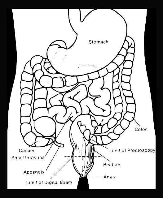 diagram of the intestines in need of inflamed gut probiotics